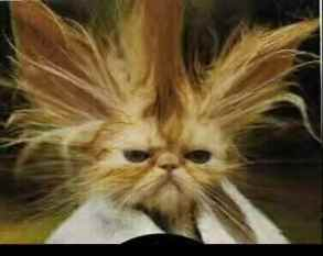 a cat having a bad hair day